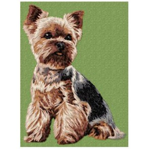 Yorkshire Terrier - DD99