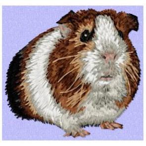 Guinea Pig - OD3
