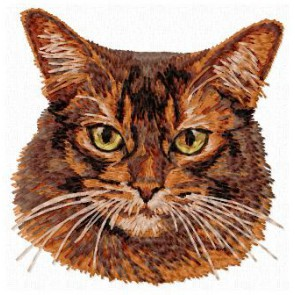Abyssinian Cat - CD5