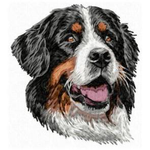 Bernese Mountain Dog - DD107