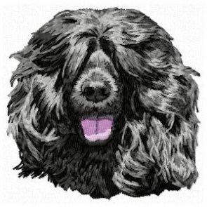 Portuguese Water Dog - DD102