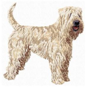 Irish Soft Coated Wheaten Terrier - DD104