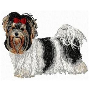 Biewer Yorkshire Terrier - DD109