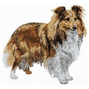 Shetland Sheepdog - DD143