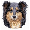 Shetland Sheepdog (Sheltie) - DD110